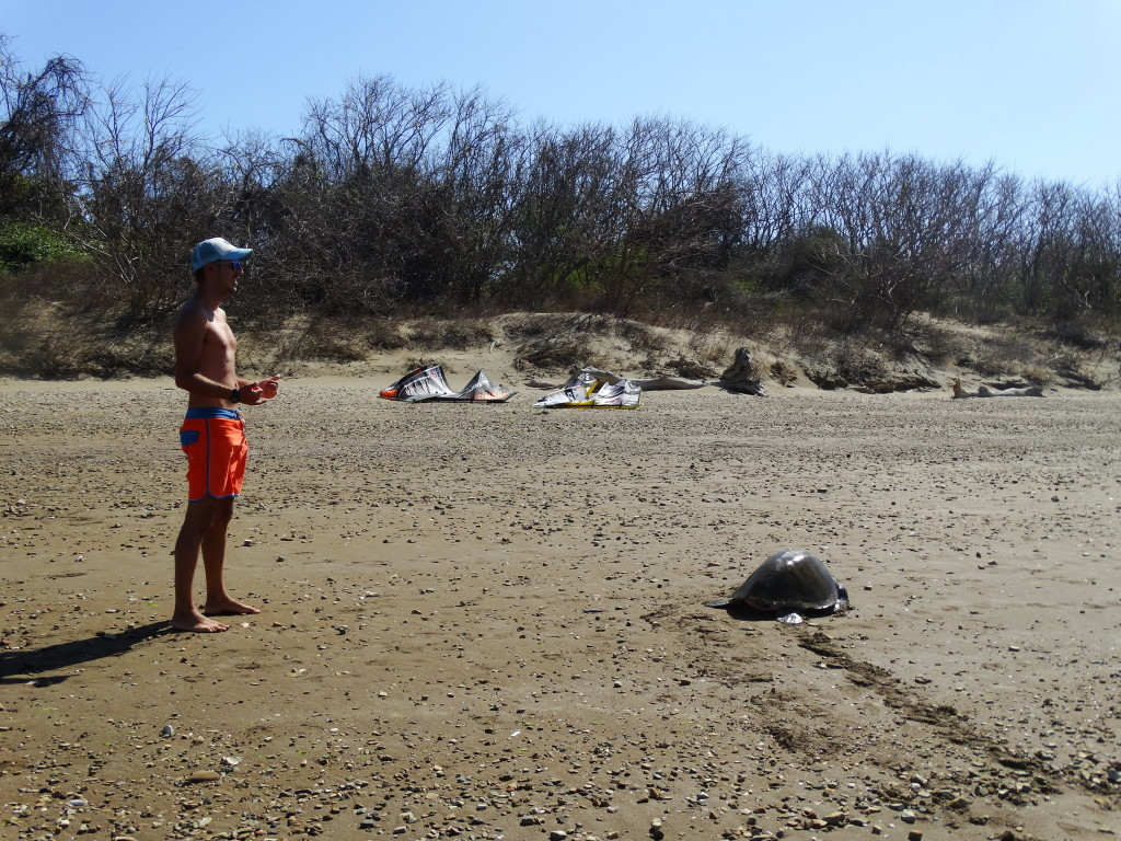 kiteboarding with turtles